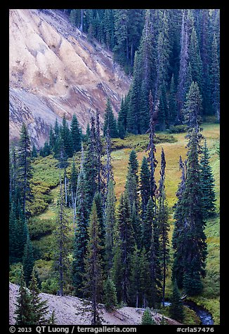 Godfrey Glen Meadow and ash cliffs. Crater Lake National Park (color)