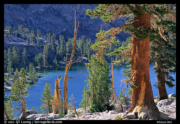 Pines and Rae Lake. Kings Canyon National Park (color)