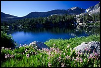 Wildflowers and Woods Lake, morning. Kings Canyon  National Park, California, USA.