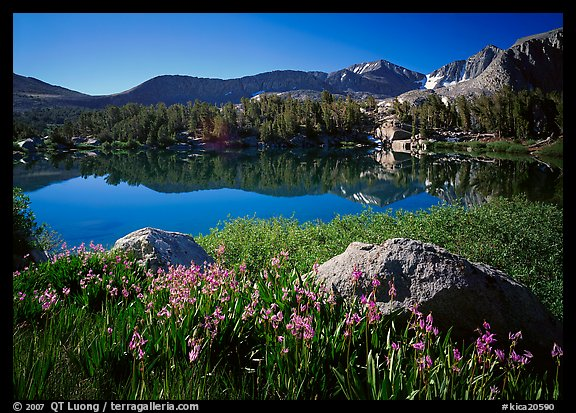 Wildflowers and Woods Lake, morning. Kings Canyon National Park (color)