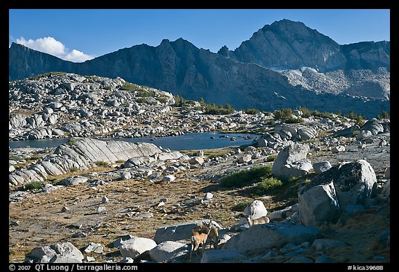 Deer, boulders, alpine lake, and mountains, Dusy Basin. Kings Canyon National Park (color)