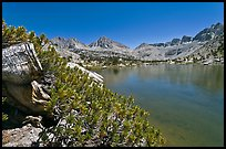 Wood stump and lake, Lower Dusy Basin. Kings Canyon National Park, California, USA.