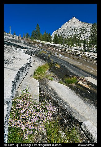 Wildflowers and water over granite slabs, Le Conte Canyon. Kings Canyon National Park (color)