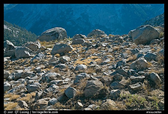 Boulders in meadow above Le Conte Canyon. Kings Canyon National Park (color)