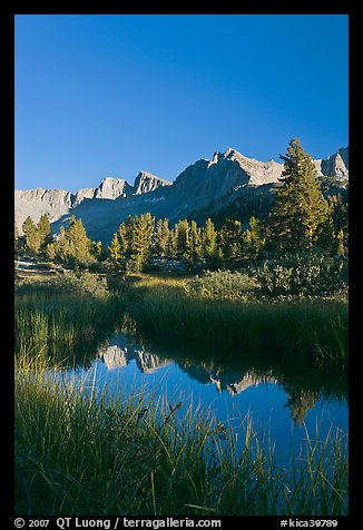 Grasses and mountains reflections, Lower Dusy basin. Kings Canyon National Park (color)