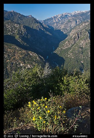 Flowers and Middle Forks of the Kings River. Kings Canyon National Park (color)