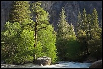 Stream and pine trees in spring. Kings Canyon National Park, California, USA.