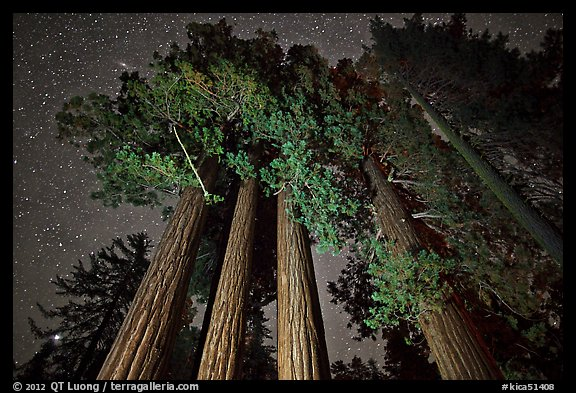 Giant sequoia grove and starry sky. Kings Canyon National Park (color)