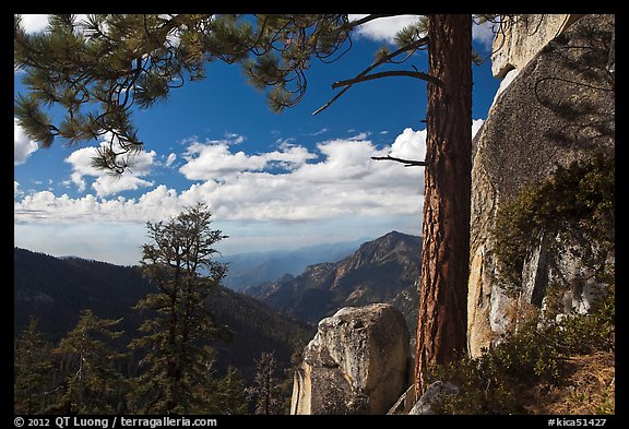 Pine and outcrops, Lookout Peak. Kings Canyon National Park (color)