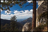 Pine and outcrops, Lookout Peak. Kings Canyon National Park, California, USA. (color)