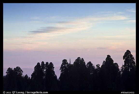 Silhouettes of sequoia tree tops at sunset. Kings Canyon National Park (color)