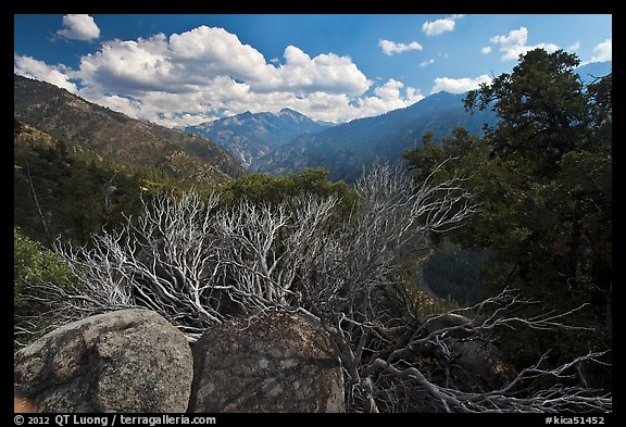 Manzanita branches and Cedar Grove Valley. Kings Canyon National Park (color)