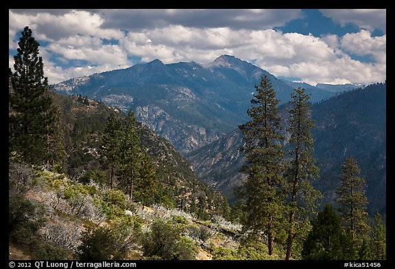 Peaks and trees from Cedar Grove rim. Kings Canyon National Park (color)