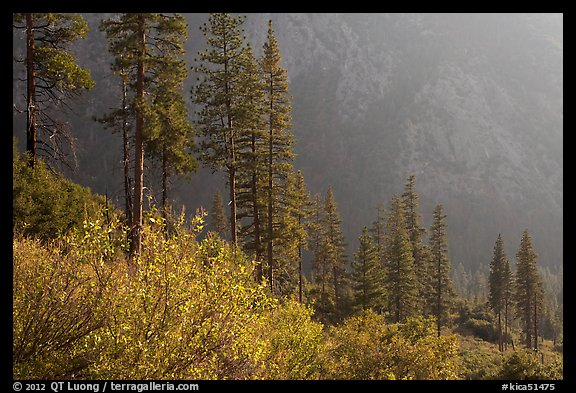 Trees and canyon walls, late afternoon. Kings Canyon National Park (color)