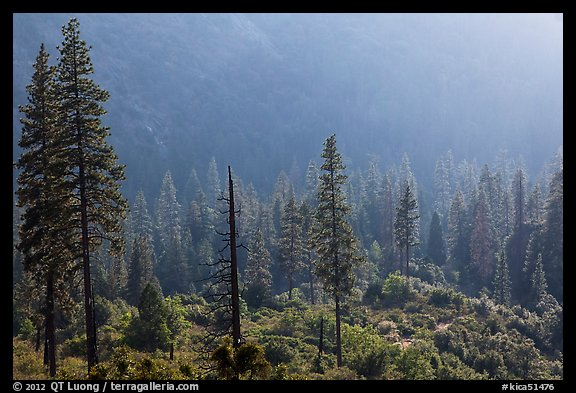 Forest and valley slopes. Kings Canyon National Park (color)