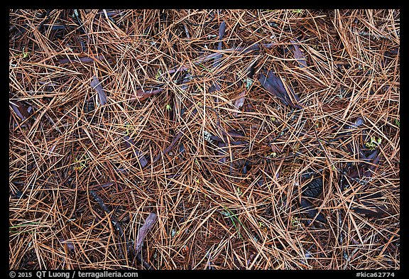 Close-up of fallen needles and chunks of wood. Kings Canyon National Park (color)