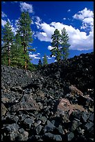 Pines on Fantastic lava beds. Lassen Volcanic National Park ( color)