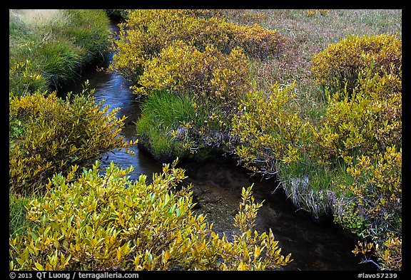 Shrubs and stream, late summer. Lassen Volcanic National Park (color)
