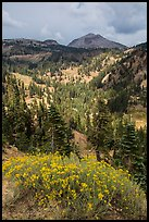 Rabbitbrush in bloom, forested valley, and Lassen Peak. Lassen Volcanic National Park ( color)