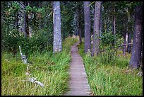 Boardwalk in meadow, Hot Springs Creek. Lassen Volcanic National Park ( color)