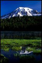Mt Rainier reflected in Reflection lake, early morning. Mount Rainier National Park, Washington, USA.