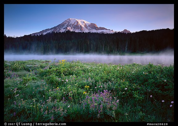 Wildflowers, Reflection Lake and Mt Rainier,  sunrise. Mount Rainier National Park (color)