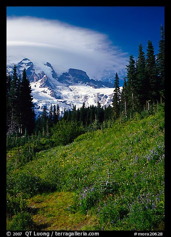 Meadow below Mount Rainier caped by cloud. Mount Rainier National Park (color)