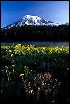 Summer wildflowers, Lake, and Mt Rainier, sunrise. Mount Rainier National Park, Washington, USA.