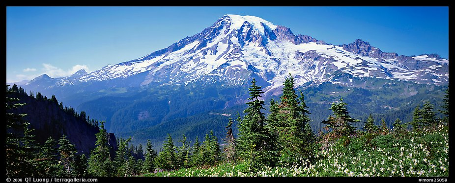 Avalanche lillies and Mount Rainier. Mount Rainier National Park (color)