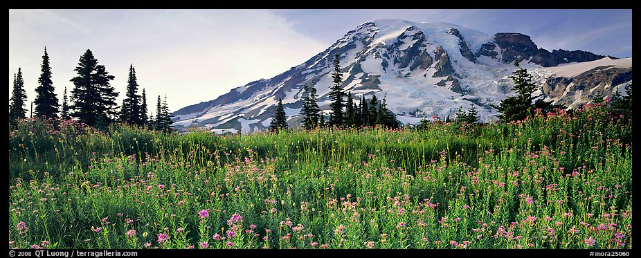 Carpet of wildflowers and snowy mountain. Mount Rainier National Park (color)