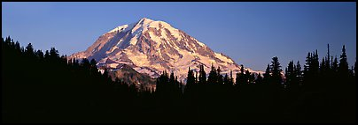 Mount Rainier above forest in silhouette. Mount Rainier National Park (Panoramic color)