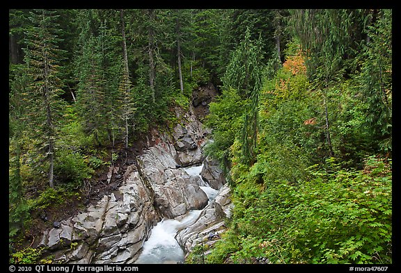 Van Trump Creek flows in lush forest. Mount Rainier National Park (color)