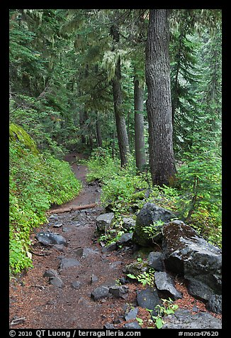 Comet Falls trail. Mount Rainier National Park (color)