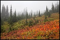 Foggy alpine meadows in autumn. Mount Rainier National Park, Washington, USA. (color)