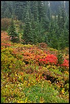 Meadow and forest in autumn. Mount Rainier National Park, Washington, USA.