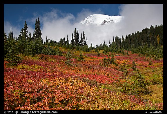 Mount Rainier emerging above clouds and meadows in autumn. Mount Rainier National Park (color)