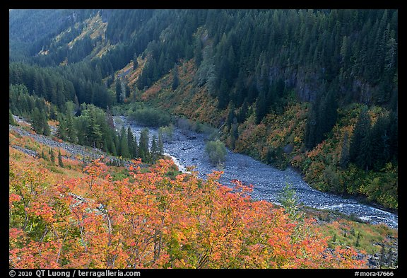 Stevens Canyon in autumn. Mount Rainier National Park (color)