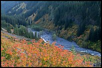 Stevens Canyon in autumn. Mount Rainier National Park, Washington, USA. (color)