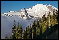 Forest, Mt Rainier and fog, early morning. Mount Rainier National Park, Washington, USA. (color)