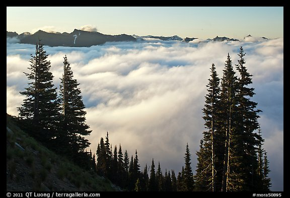 Sea of clouds and Governors Ridge, early morning. Mount Rainier National Park (color)