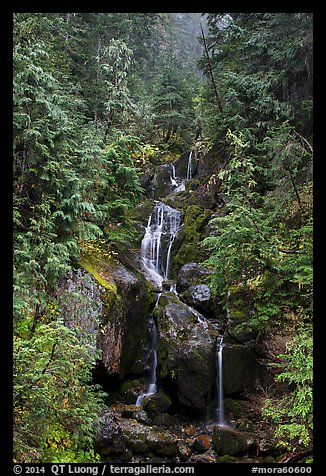 Multi-tiered waterfall in old-growth forest. Mount Rainier National Park (color)