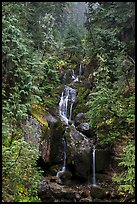 Multi-tiered waterfall in old-growth forest. Mount Rainier National Park ( color)