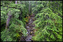 Creek in old-growth forest from above. Mount Rainier National Park ( color)