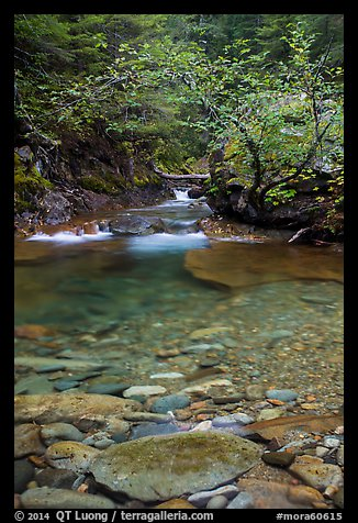 Water flowing in Panther Creek. Mount Rainier National Park (color)