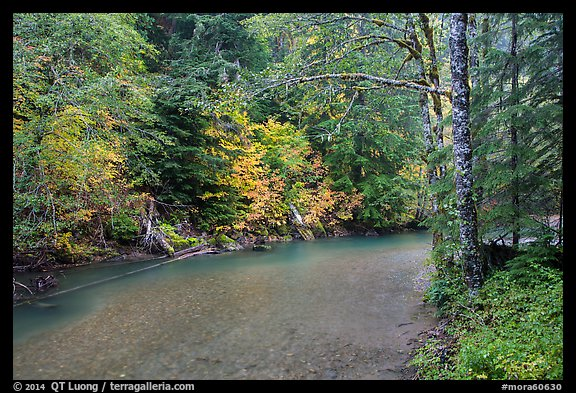 Ohanapecosh river bordered by trees in fall foliage. Mount Rainier National Park (color)
