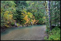 Ohanapecosh river bordered by trees in fall foliage. Mount Rainier National Park ( color)
