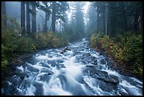 Stream above Narada Falls in fog. Mount Rainier National Park ( color)