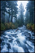 Stream on its way to Narada Falls. Mount Rainier National Park ( color)