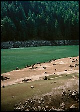Tree stumps and river, North Cascades National Park Service Complex. Washington, USA. (color)