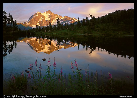 Fireweed, Mount Shuksan reflected in Picture lake, sunset. North Cascades National Park (color)